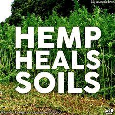 Hemp Heals soils